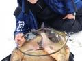Feederfishing.tv-norfin-sensas-bream-