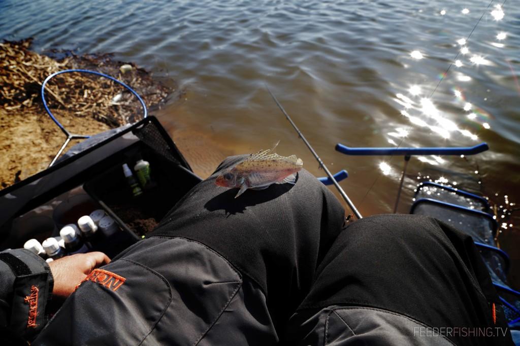 Feederfishing.tv-Norfin-web