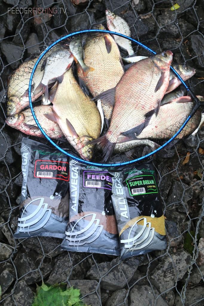 feederfishing.tv allvega bream