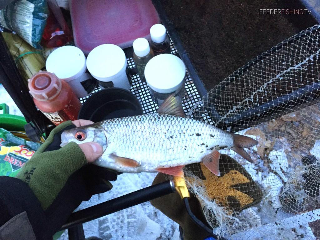 Feederfishing.tv-gros-gardons-sensas