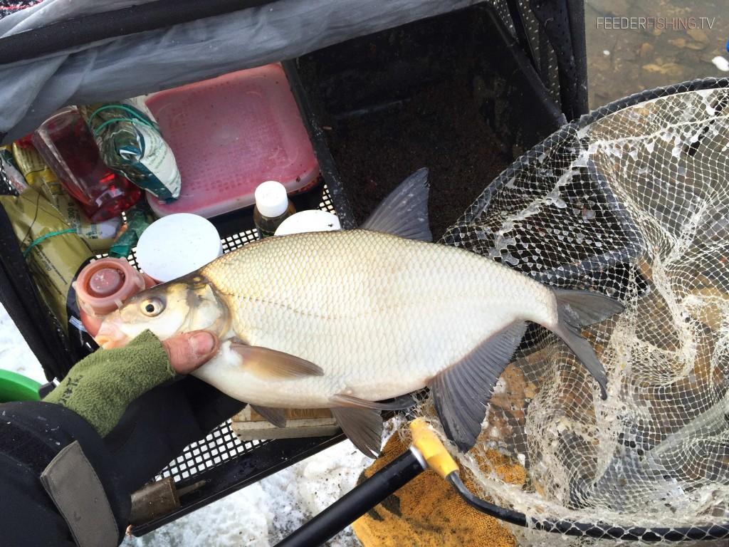 Feederfishing.tv-norfin-sensas-winter-bream