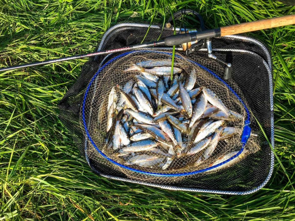 Feederfishing.tv-8