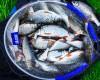 Vlog #15 Рыбалка на фидер. Ловля плотвы. Feederfishing.tv рыбалка с Сергеем Пузановым